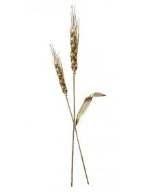Épi de blé croisé